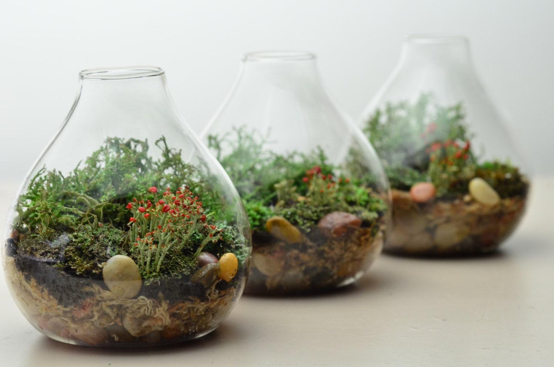 Lichen Terrarium Forest Teardrop Vase Home And Living
