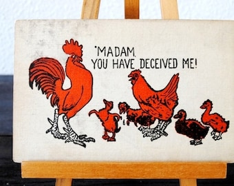 "Early Antique Postcard Rooster Cockerel & Ducks Comic, 1905 ""Madam You Have Deceived Me"""