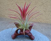 "2"" Wooden Stand Perfect for Plants"