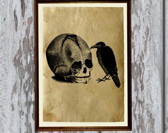 Skull and crow print Antique paper Antiqued decoration AK385