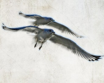 Flying birds photograph twin beach seagulls fine art print photography