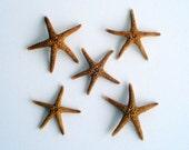 Brown Starfish Set of 10