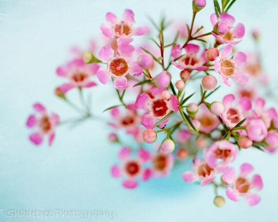 Baby Robins Egg Blue Easter Spring decor Pastel Pink Floral Flowers Nursery Decor, Soft Dreamy, Fine Art Print