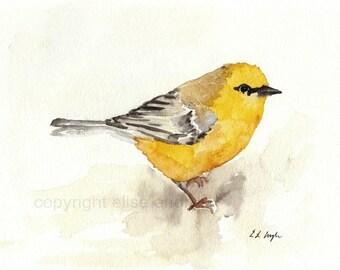 Watercolor Bird Art, Fine Art Giclee Print, Yellow Wood Warbler,8x10, home decor, bird painting