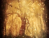 Magical Tree Hearts - Fine Art Photography 8x10 - Dreamy Forest Golden Light - Lone Tree Branches - Tonight, Tonight - StudioYuki