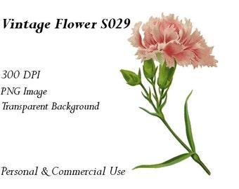 Vintage Flower Clip Art Transparent Png File  S029