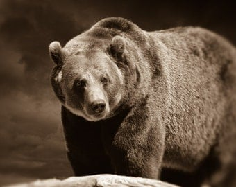 Bear Photography, Sepia Photograph, Animal Picture, Wildlife Decor, Man Cave Wall Art, Brown Photo56