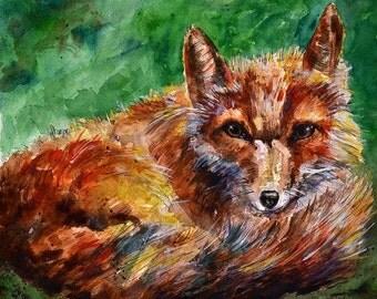 Coastal Fox, Limited Edition Fine Art Print 8 x 10
