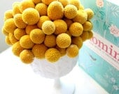 Heirloom 400 Seeds Craspedia Globosa Drumstick Perennial Billy Buttons Garden Yellow Flower Bulk seeds B1013
