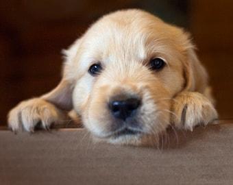 Sweet Charlie, Dog Photography, Golden Retriever, Blank Photo Card