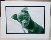 photo card, puppy, black and white, dog, photograph card