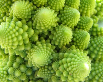 Heirloom Broccoli Romanesco, Unusual Plant with Swirls, Garden Favorite, Italian Variety, 20 Seeds