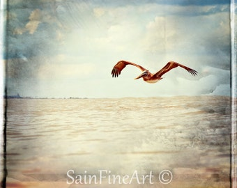 "Hanging on Lazy Wings - Surf Art - Retro - Pelican - Bird Art - Fine Art Photography  5""X5"" - Vintage - Home Decor"