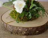 SALE - Rustic Wood Slab from Tree Slice from Tree Trunk - Perfect for Wedding Cake Base or Centerpiece
