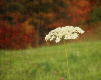 """8x12 Canvas Gallery Wrap-Fine Art Photography-""""Autumn Lace""""-Maine-New England-Flowers-Fall"""