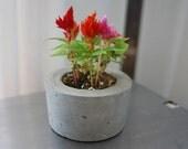 Concrete Planter - Sustainable Concrete Pot - Indoor Outdoor planter - Eco-Friendly Decor