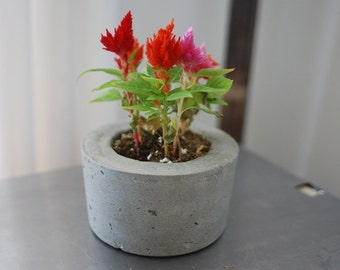 Concrete Planter - Sustainable Concrete Pot - Indoor Outdoor planter - Eco-Friendly Decor