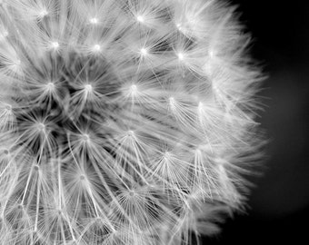 Flower Photograph - Black and White Dandelion
