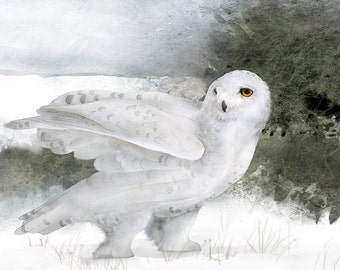 Snowy Owl 3 signed fine art print 9x12 Bird lover Owls