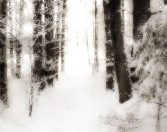 Photo Print - Soft Snowy Path in the Woods