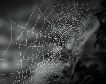 Photo Print - Black and White Spider Web, Film Photography