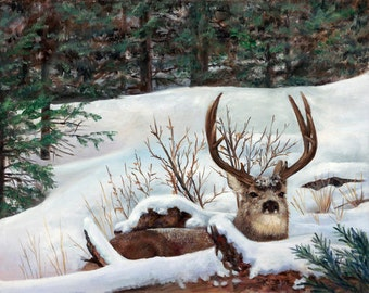 Winter Rest A Giclee print of a Mule Deer in a winter scene