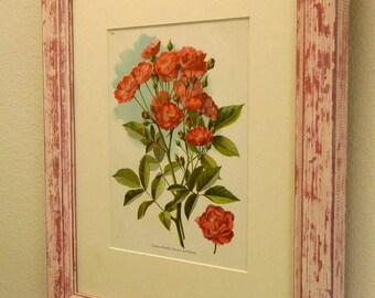 antique framed chromolithograph botanical print