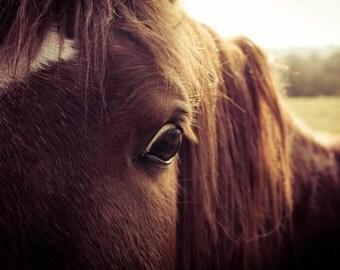 Abstract Horse Eye Photograph, Print Wall Art, Brown and Green, Sunset, Animal, Wildanimal, Nursery Decor, Print