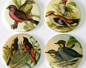 Pairs of Birds Illustrations - Set of 4 Large Fridge Magnets