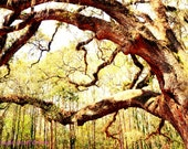 Enchanted Forest/Fine Art Photo Print/Photography/Tree/Green/Nature/Forest - PointofViewCreations