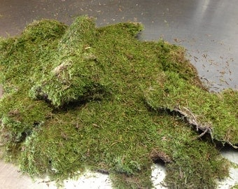 sheet moss, fresh moss, moss vase filler, moss floral supply, bag of moss, moss DIY decor, moss wedding decor