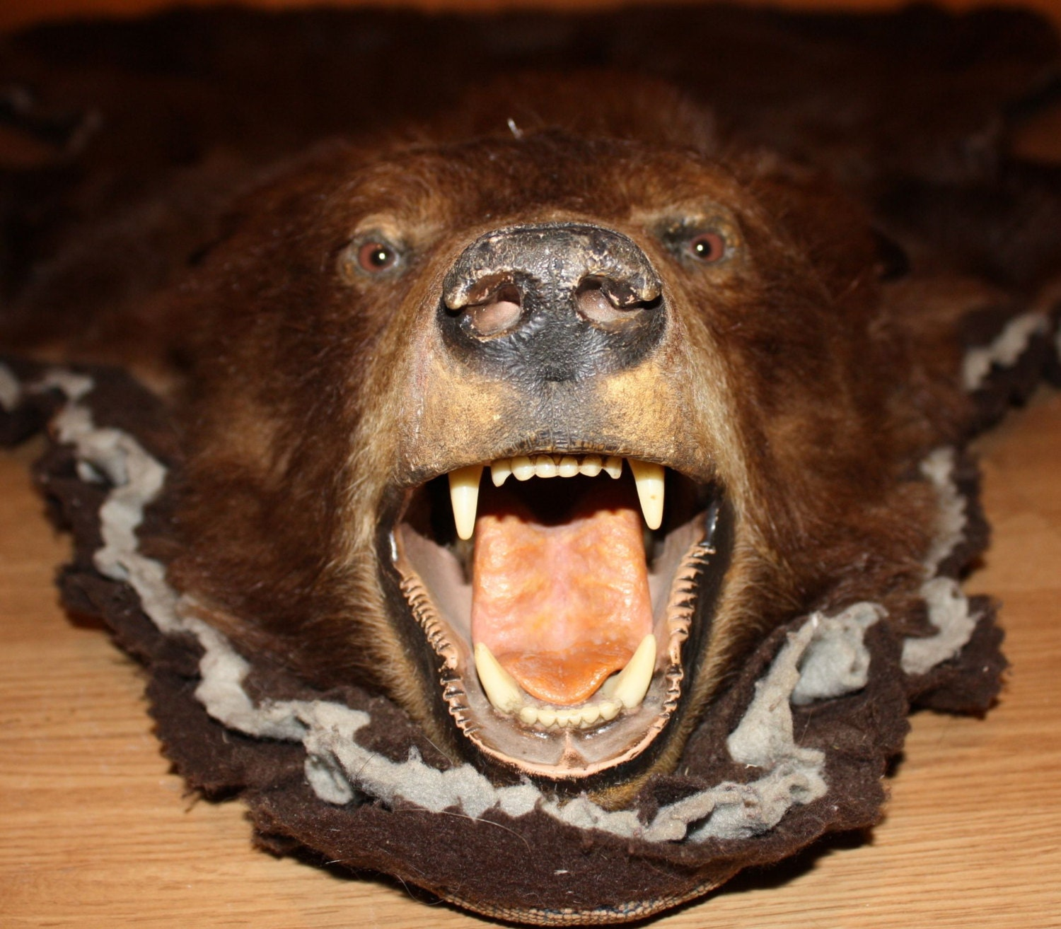 Authentic Brown Bear Skin Rug With Taxidermy Mounted Head