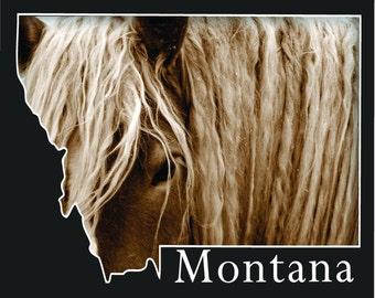Montana Postcard- Draft Horse