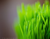 THE NATURE COLLECTION, macro photography, wheat grass, bokeh, soft green, bright green, pastel, purple, fresh, spring, summer, rustic