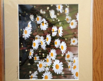 Field of Daisies 11x14