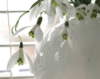Vase of Snowdrops Fine Art Photographic Blank Greetings Card