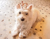 Leather dog crown with stone & studs Size S