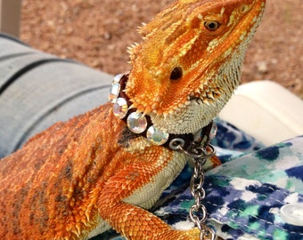 CUSTOM Adult Bearded dragon collar - adjustable with lanyard