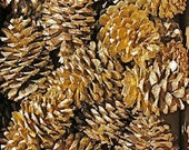 12 Handpainted Metallic Gold Rustic Primitive Pinecones from Denver Colorado Great for Crafts