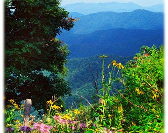 Wildflowers in the Blue Ridge Mountains