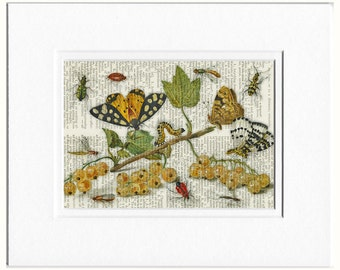 insects, 1650's romantic III print