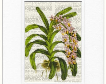 orchid book page print
