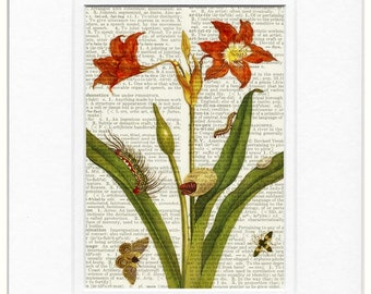 1600's botanical no. 16 print