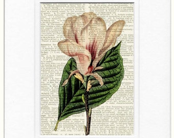 magnolia  on vintage dictionary page