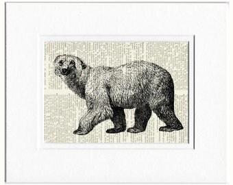 polar bear dictionary page print