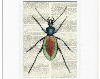 beetle, ground beetle no. 1 print
