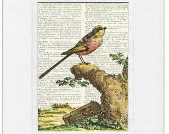 bird VII dictionary page print