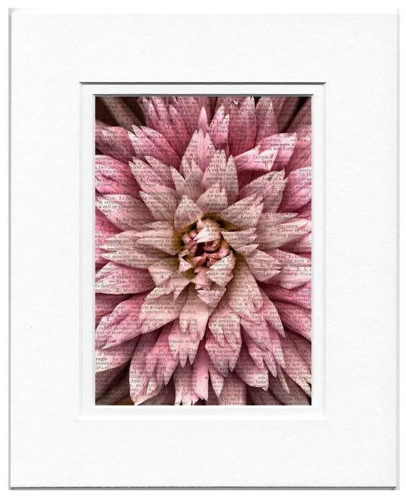 farmers market pink dahlia photo