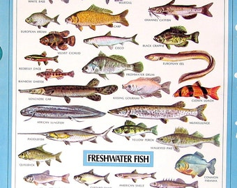 Flies, Freshwater Fish - 2 Sided 1972 Vintage Dictionary Book Page