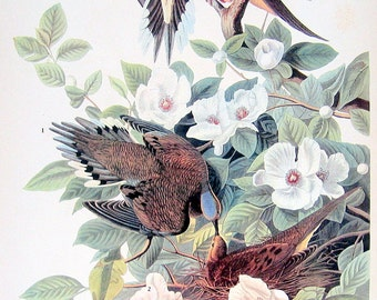 Audubon Birds - Mourning Dove, Bewick's Wren - 1941 2 sided Book Plate with Names and Descriptions
